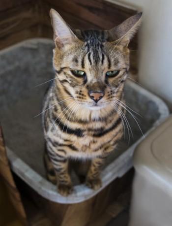 猫のトイレ2 画像