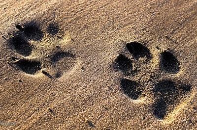 犬の足跡1 画像