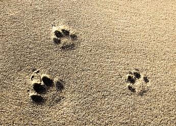 猫の足跡1 画像