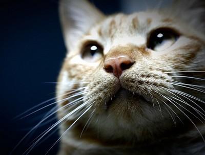 猫のひげ1 画像