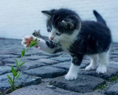 子猫の歩き始め2 画像