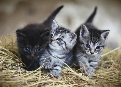 子猫の歩き始め1 画像