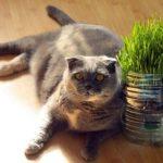 猫の去勢後の餌、選ぶときの5つポイント!