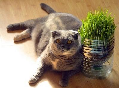 猫の去勢後の餌1 画像