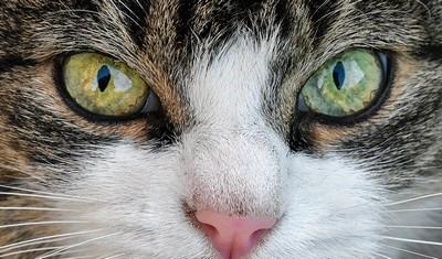 猫の目1 画像