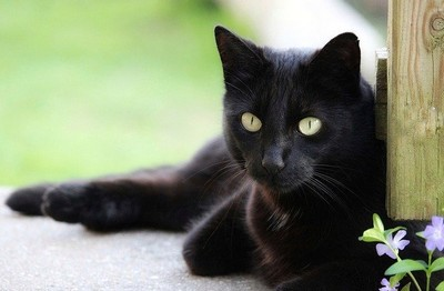 猫の目2 画像