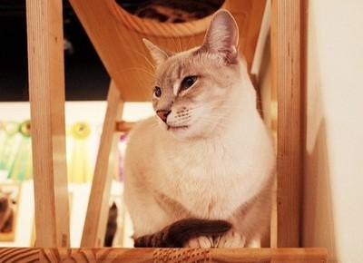 保護猫 画像