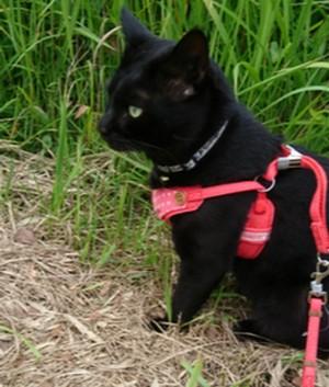 愛猫ジェリーの散歩1 画像