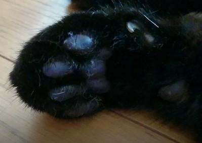 愛猫ジェリーの肉球 画像