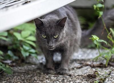 猫のしっぽ 機嫌 画像