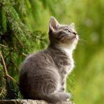 猫の耳掃除なら「綿棒/コットン/ティッシュ」一番はどれ?