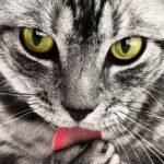 【体験談】猫に手を噛まれた!!病院選びから処置まで