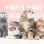 子猫が手を噛む理由があるってホント?