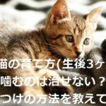 子猫の育て方(生後3ヶ月)|噛むのは治せない?しつけの方法を教えて!