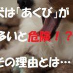 犬は「あくび」が多いと危険!?その理由とは…