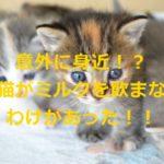 意外に身近!?子猫がミルクを飲まない5つのわけとは?