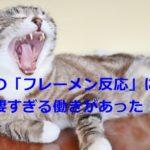 猫の「フレーメン反応」には凄すぎる働きがあった!