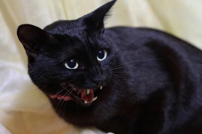 愛猫ジェリー 口が半開き 画像